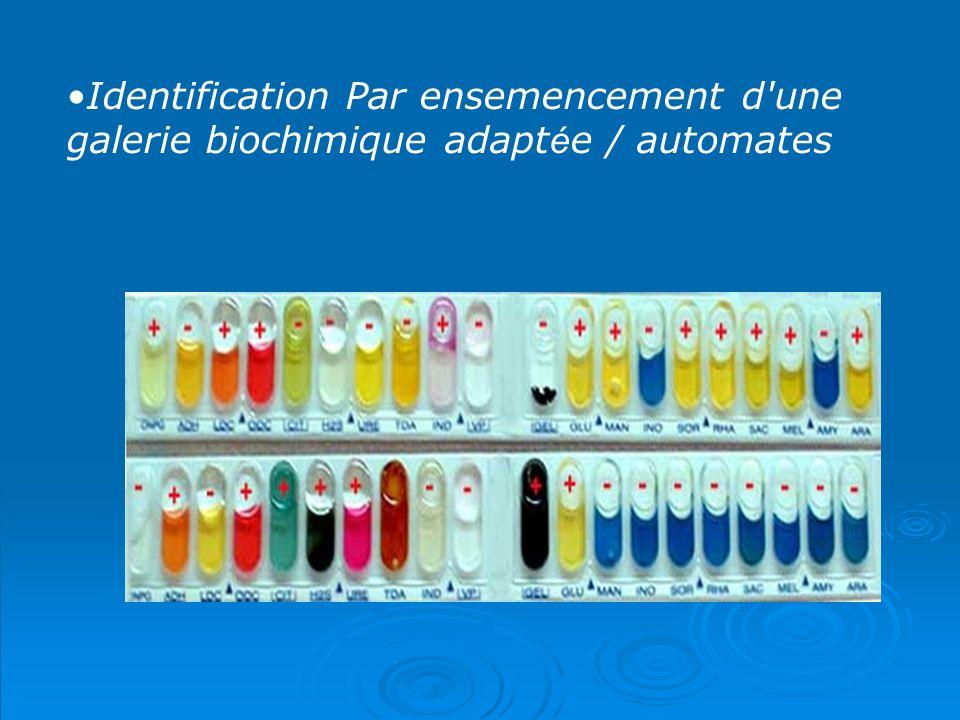 Identification Par ensemencement d'une galerie biochimique adapt é e / automates