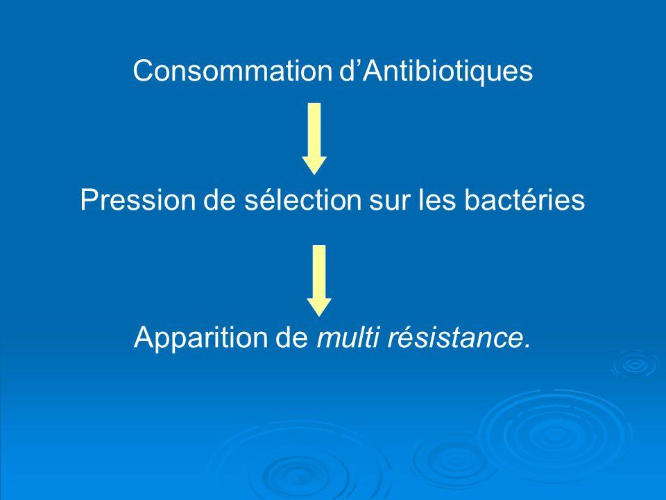 Consommation dAntibiotiques Pression de sélection sur les bactéries Apparition de multi résistance.
