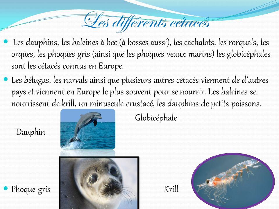 Définition dun poisson Un poisson est un animal vertébré marin doté de trous pour respirer, appelés branchies. Contrairement aux cétacés, ils ont un s
