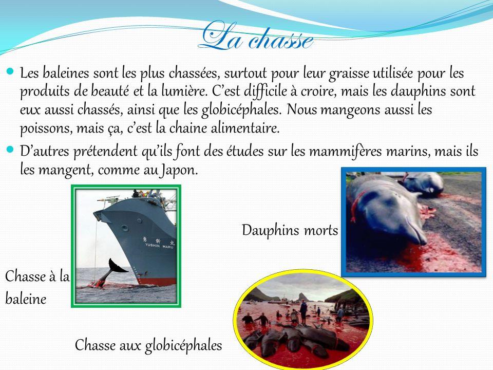 Les différents cétacés Les dauphins, les baleines à bec (à bosses aussi), les cachalots, les rorquals, les orques, les phoques gris (ainsi que les pho