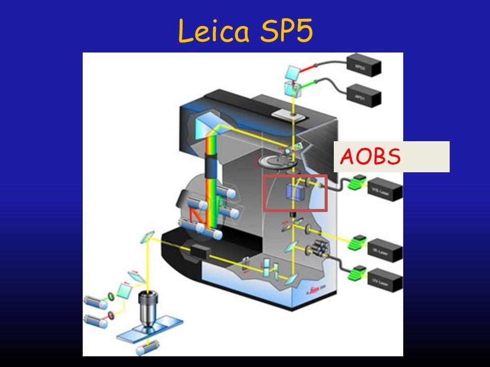 Leica SP5 AOBS