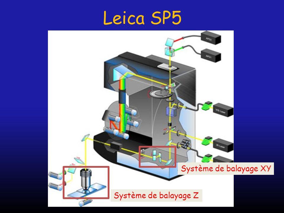 Leica SP5 Système de balayage XY Système de balayage Z