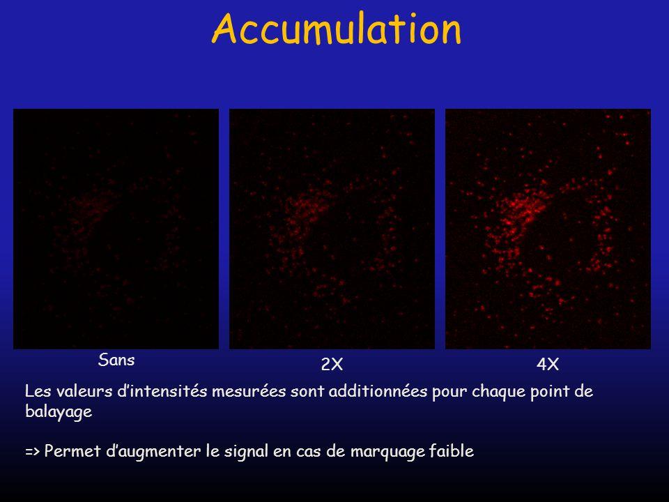 Accumulation Les valeurs dintensités mesurées sont additionnées pour chaque point de balayage => Permet daugmenter le signal en cas de marquage faible