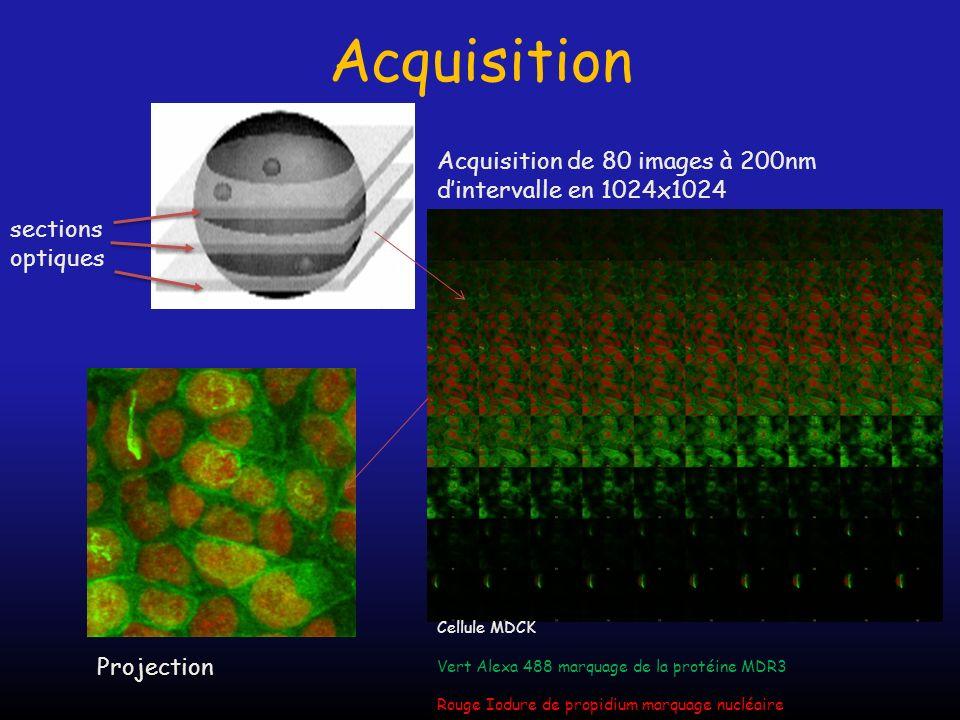 Acquisition sections optiques Acquisition de 80 images à 200nm dintervalle en 1024x1024 Projection Cellule MDCK Vert Alexa 488 marquage de la protéine