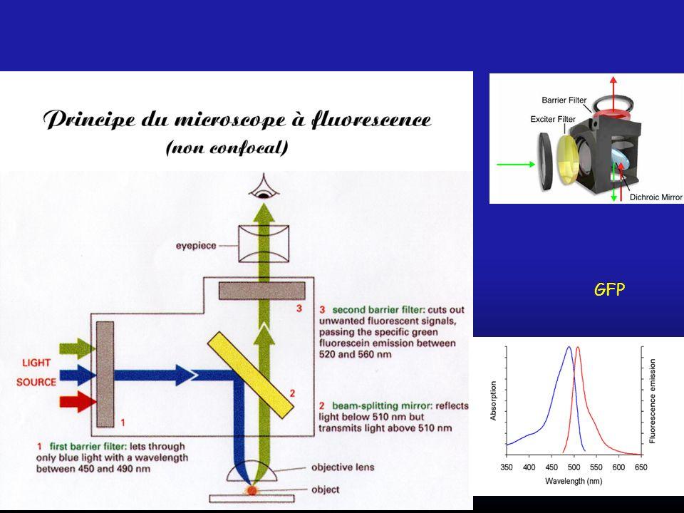 AOBS vs Dichroique Permet de supprimer les filtres dichroïques classiques qui ont des caractéristiques fixes et une bande passante faible.