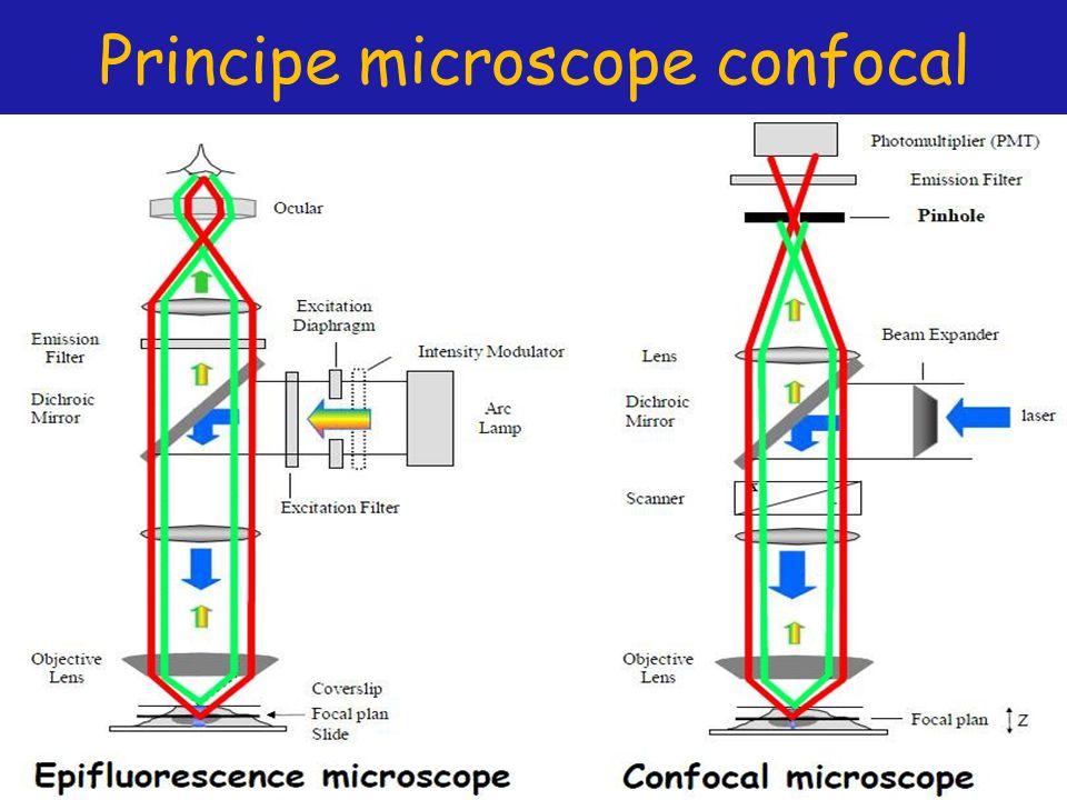Principe microscope confocal