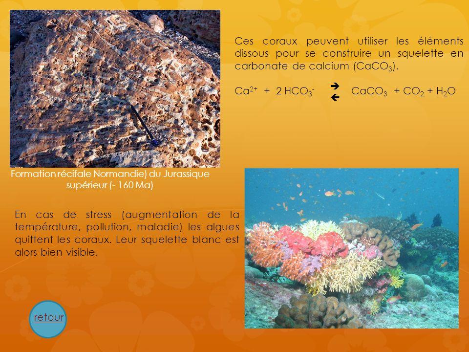 Ces coraux peuvent utiliser les éléments dissous pour se construire un squelette en carbonate de calcium (CaCO 3 ). Ca 2+ + 2 HCO 3 - CaCO 3 + CO 2 +