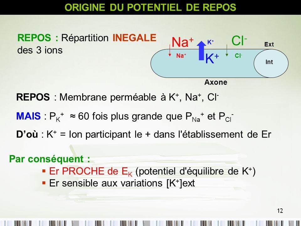 12 ORIGINE DU POTENTIEL DE REPOS Na + K+K+ K+K+ Cl - Axone Ext Int REPOS : Membrane perméable à K +, Na +, Cl - REPOS : Répartition INEGALE des 3 ions