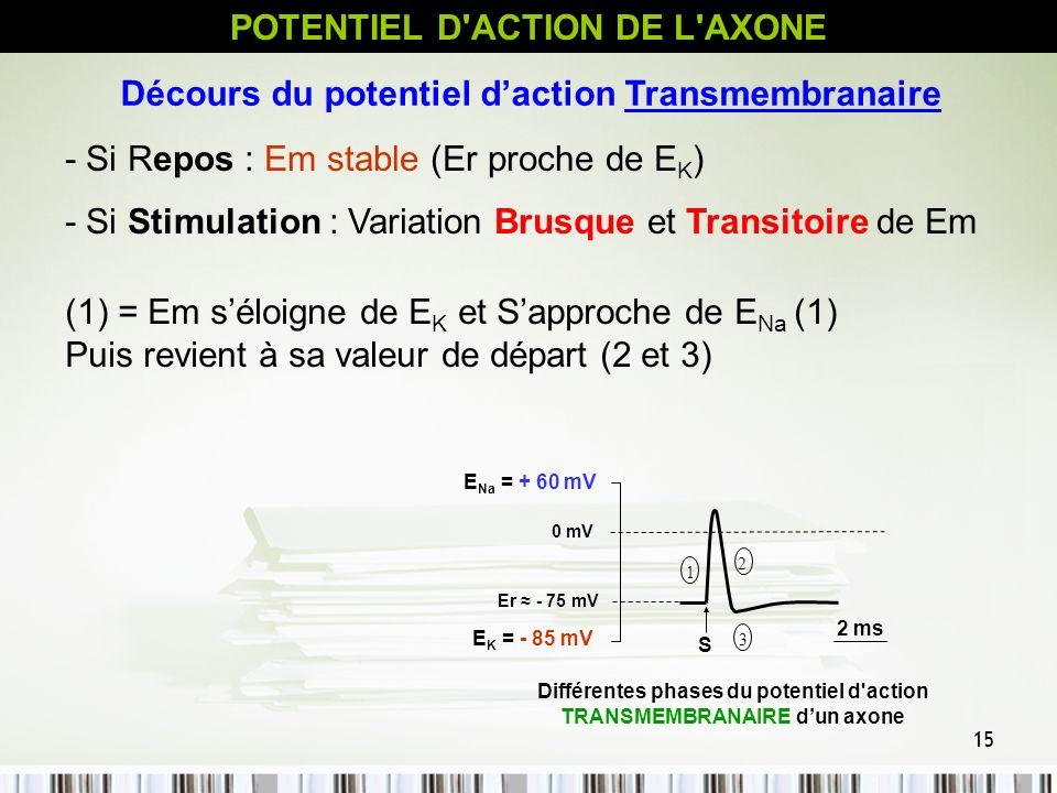 15 Décours du potentiel daction Transmembranaire - Si Repos : Em stable (Er proche de E K ) - Si Stimulation : Variation Brusque et Transitoire de Em