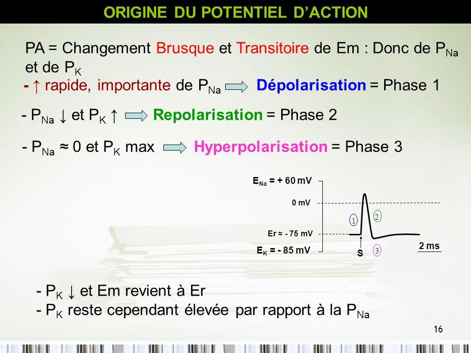 16 - P K et Em revient à Er - P K reste cependant élevée par rapport à la P Na ORIGINE DU POTENTIEL DACTION PA = Changement Brusque et Transitoire de