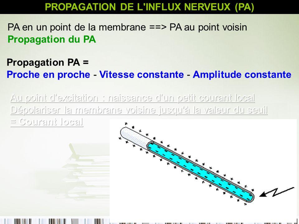 21 PROPAGATION DE L'INFLUX NERVEUX (PA) Propagation PA = Proche en proche - Vitesse constante - Amplitude constante PA en un point de la membrane ==>