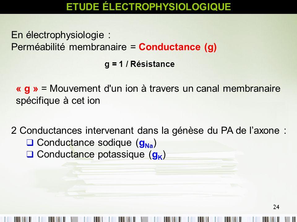 24 ETUDE ÉLECTROPHYSIOLOGIQUE En électrophysiologie : Perméabilité membranaire = Conductance (g) g = 1 / Résistance « g » = Mouvement d'un ion à trave