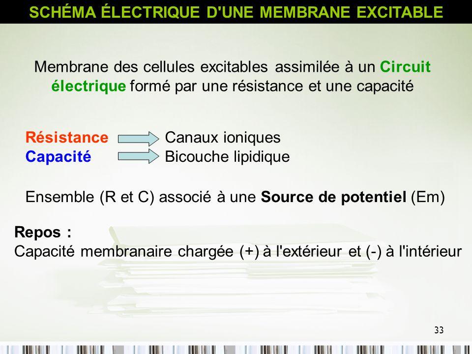 33 Repos : Capacité membranaire chargée (+) à l'extérieur et (-) à l'intérieur SCHÉMA ÉLECTRIQUE D'UNE MEMBRANE EXCITABLE Membrane des cellules excita