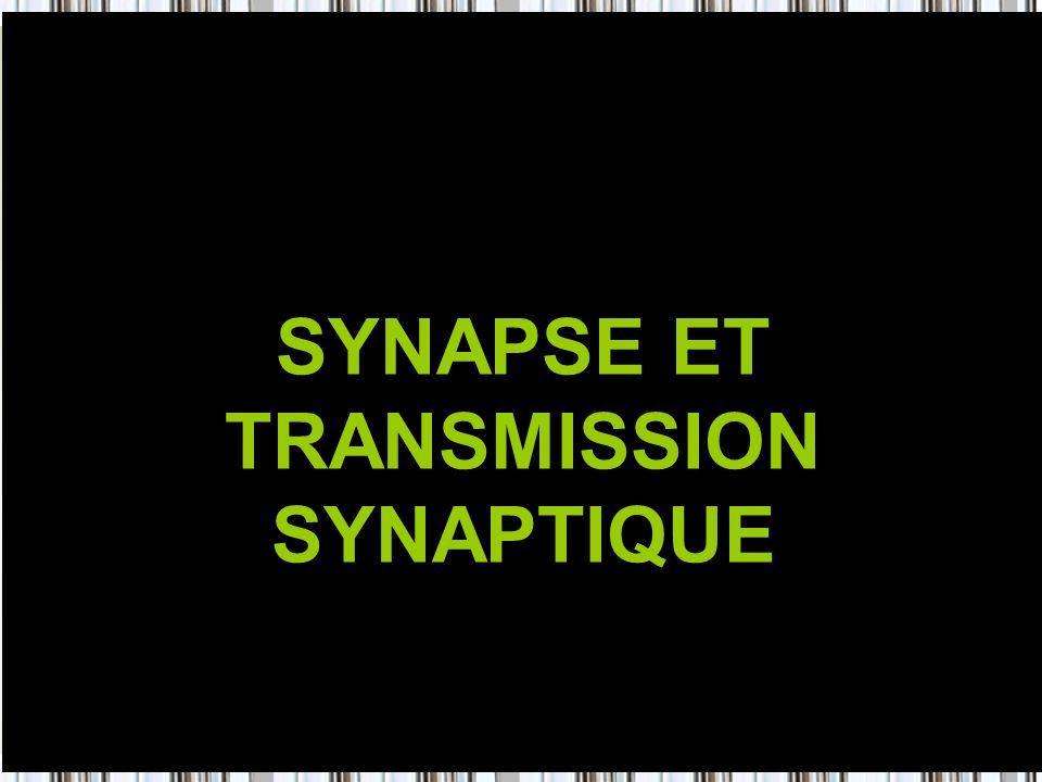 34 SYNAPSE ET TRANSMISSION SYNAPTIQUE