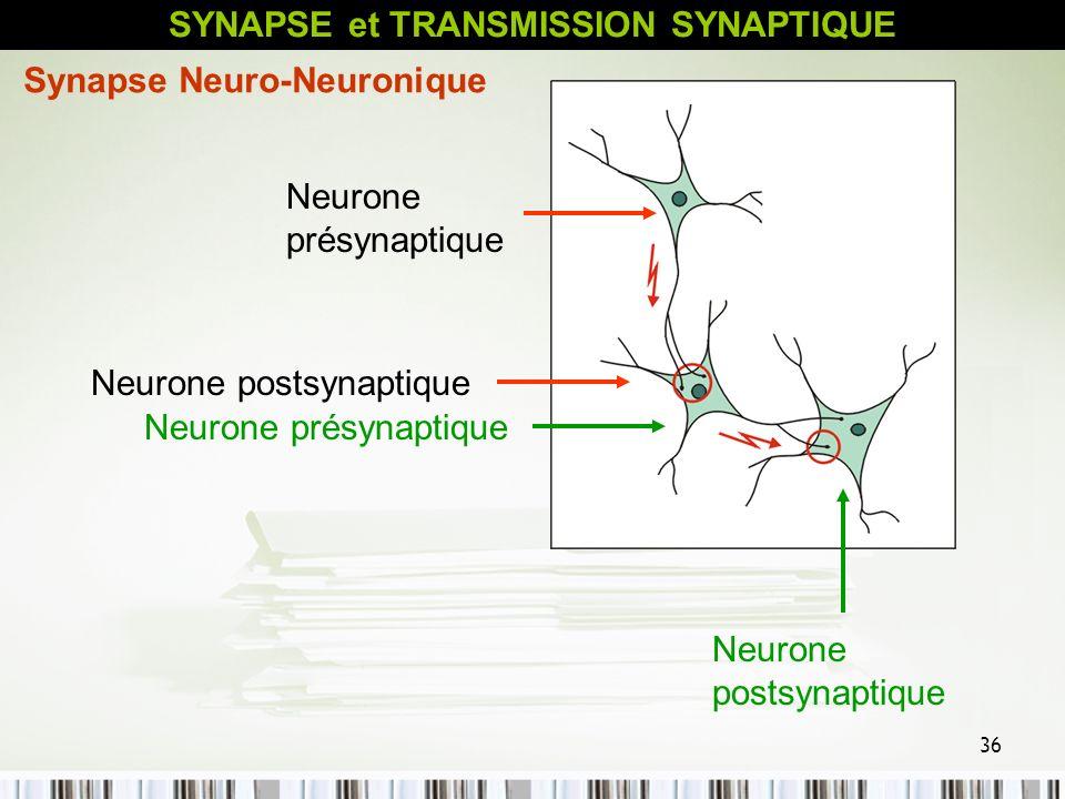 36 Neurone présynaptique Neurone postsynaptique Neurone présynaptique Neurone postsynaptique Synapse Neuro-Neuronique SYNAPSE et TRANSMISSION SYNAPTIQ