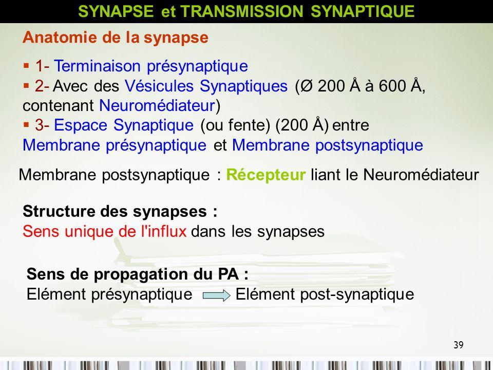 39 Structure des synapses : Sens unique de l'influx dans les synapses 1- Terminaison présynaptique 2- Avec des Vésicules Synaptiques (Ø 200 Å à 600 Å,