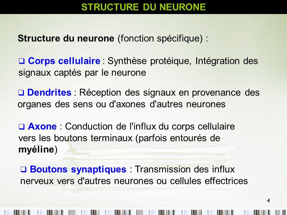 5 Corps cellulaire Noyau Axone Dendrites Boutons synaptiques L influx se dirige vers corps cellulaire Axone, l influx s éloigne du corps cellulaire STRUCTURE DU NEURONE