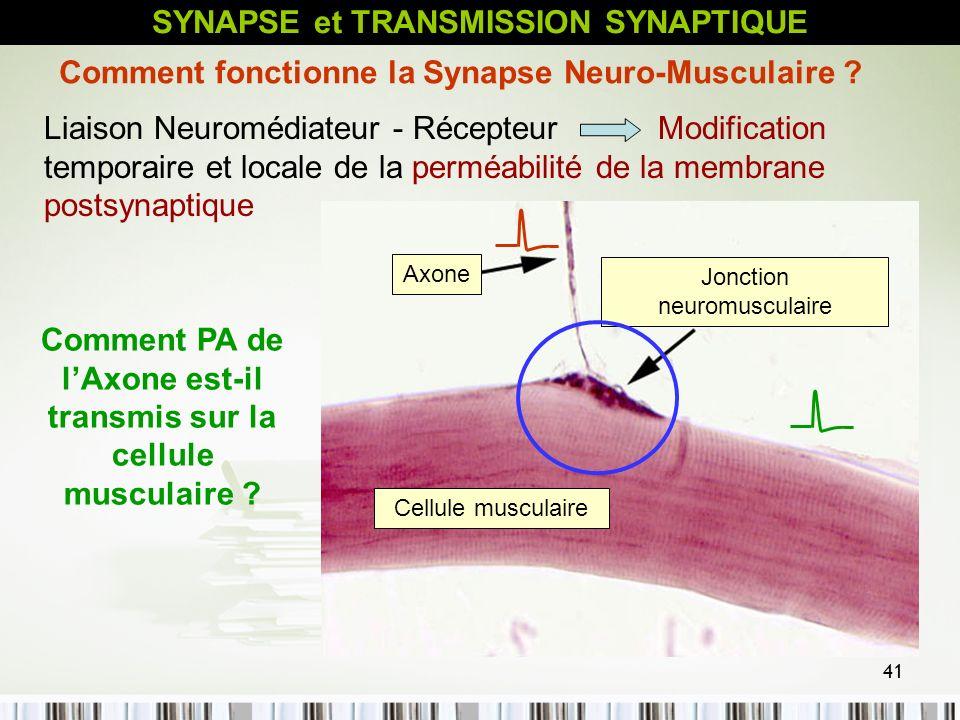 41 Liaison Neuromédiateur - Récepteur Modification temporaire et locale de la perméabilité de la membrane postsynaptique Comment fonctionne la Synapse