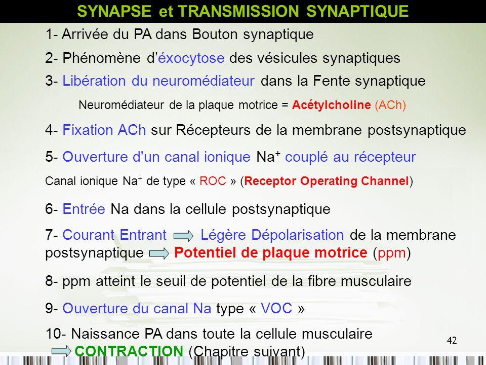 42 1- Arrivée du PA dans Bouton synaptique 4- Fixation ACh sur Récepteurs de la membrane postsynaptique 2- Phénomène déxocytose des vésicules synaptiq