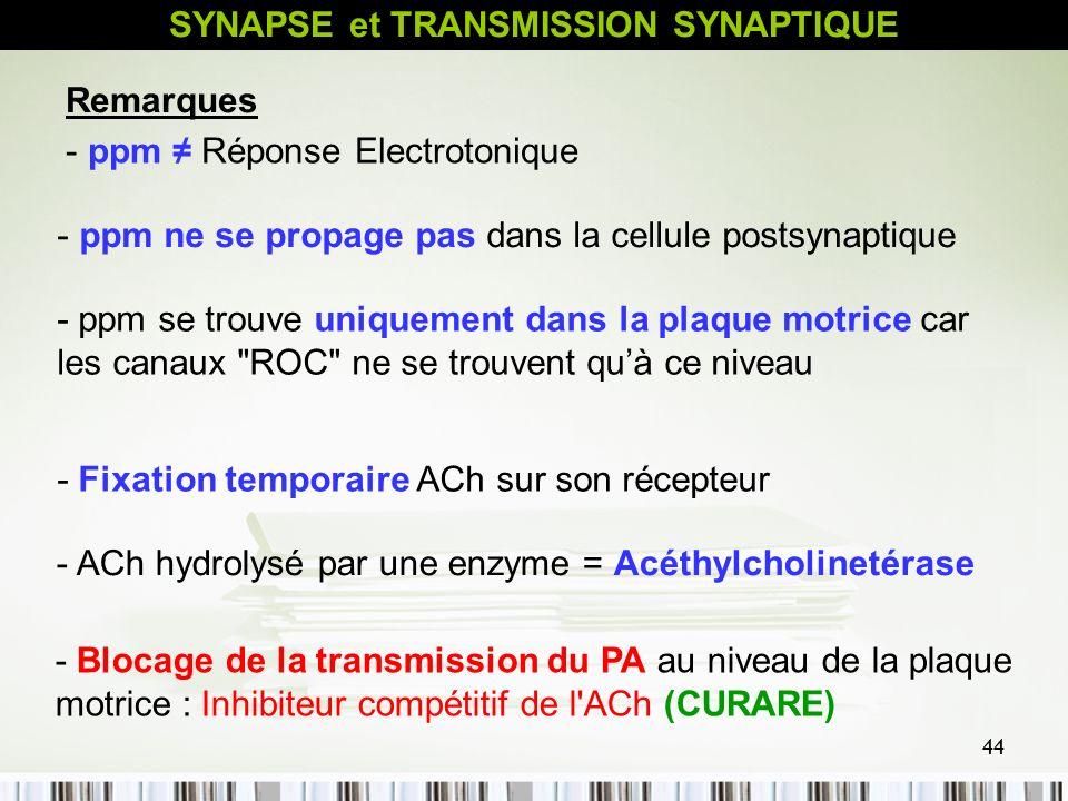 44 - ppm ne se propage pas dans la cellule postsynaptique - ppm se trouve uniquement dans la plaque motrice car les canaux