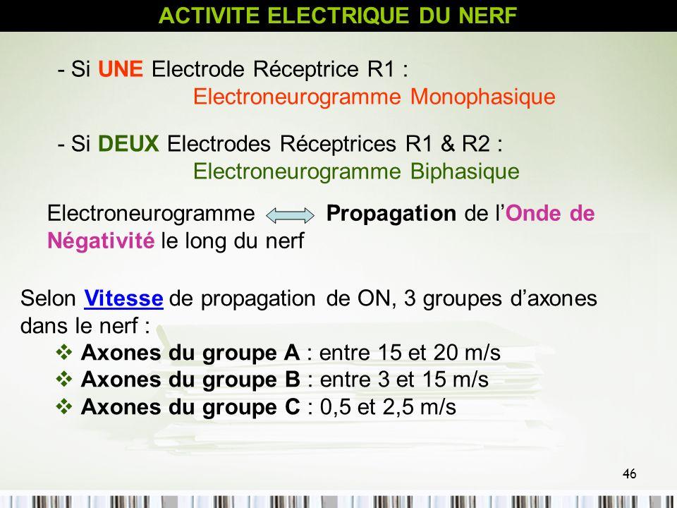 46 Selon Vitesse de propagation de ON, 3 groupes daxones dans le nerf : Axones du groupe A : entre 15 et 20 m/s Axones du groupe B : entre 3 et 15 m/s