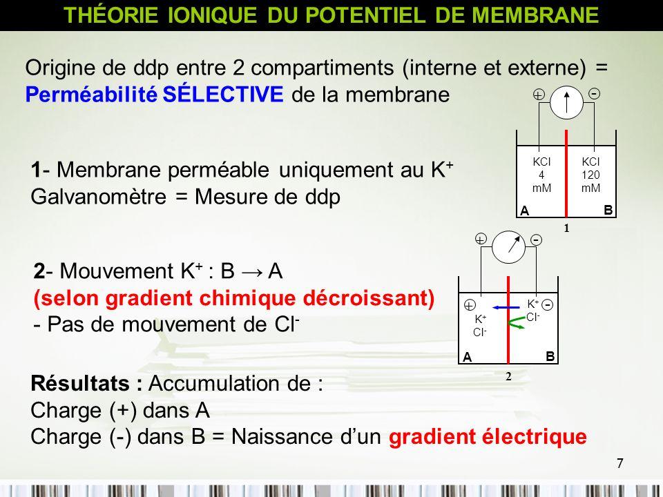 8 3 - Passage continu de K + : «A» progressivement plus (+) que «B» - Gradient électrique renforcé Favoriser Mouvement en sens inverse de K + de A vers B (selon le gradient électrique) - Si flux de K + de B vers A (selon le gradient de concentration) = flux de K + A vers B (sens du gradient électrique) : Etat d équilibre K + Cl - K + Cl - + - 3 + - A B - Etat d équilibre : Gradient Chimique = Gradient Electrique - ddp mesurée à l état d équilibre, pour un ion X, est nommée Potentiel d équilibre de cet ion (E X ) THÉORIE IONIQUE DU POTENTIEL DE MEMBRANE