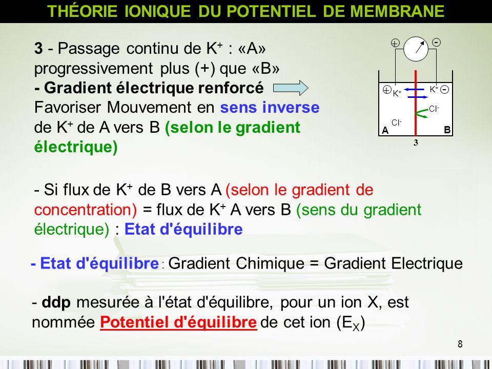 8 3 - Passage continu de K + : «A» progressivement plus (+) que «B» - Gradient électrique renforcé Favoriser Mouvement en sens inverse de K + de A ver
