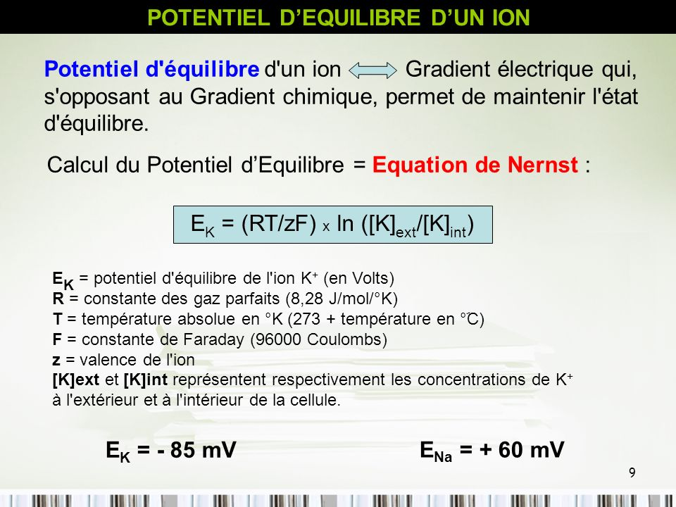 9 E K = (RT/zF) x ln ([K] ext /[K] int ) Potentiel d'équilibre d'un ion Gradient électrique qui, s'opposant au Gradient chimique, permet de maintenir