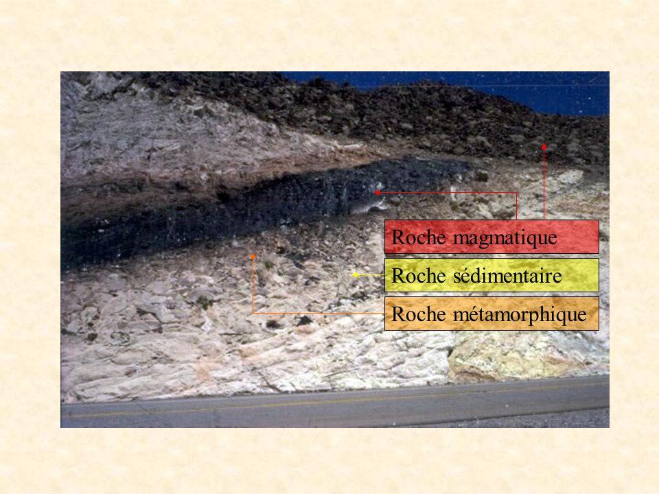Globotruncana est un genre de foraminifère marin planctonique (organisme microscopique entouré d une coquille ou test facilement conservé dans les sédiments).