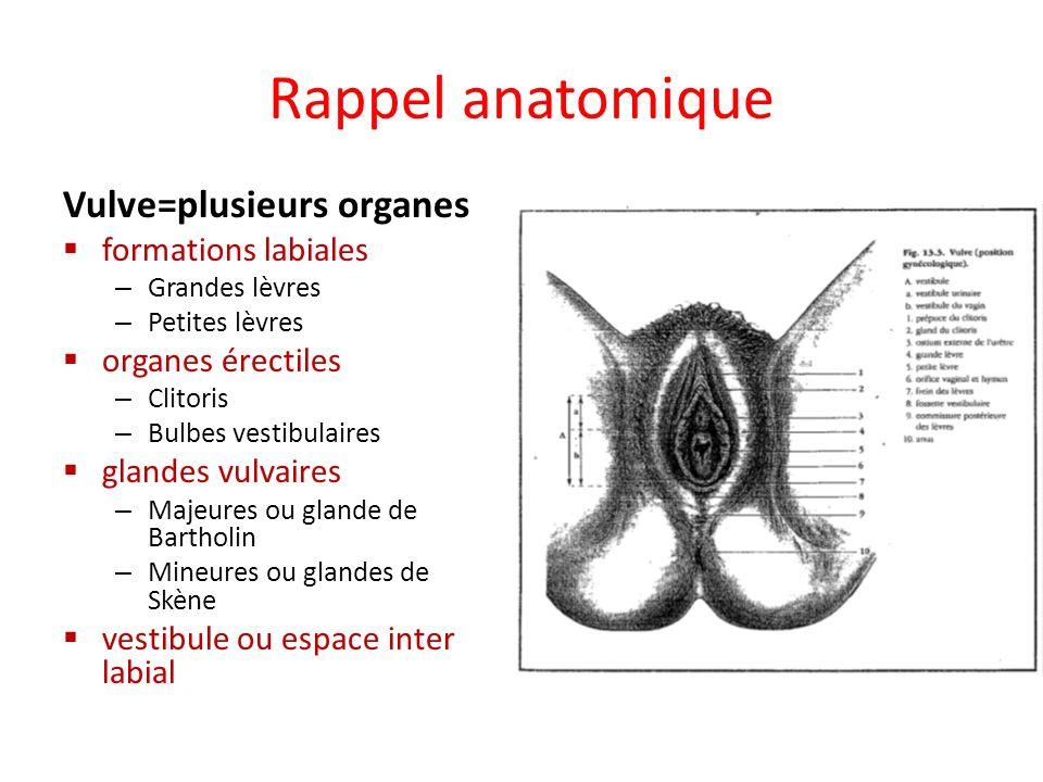 Rappel anatomique Vulve=plusieurs organes formations labiales – Grandes lèvres – Petites lèvres organes érectiles – Clitoris – Bulbes vestibulaires gl