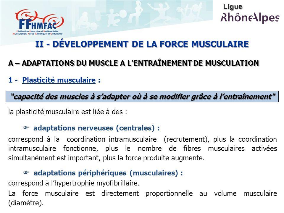 la plasticité musculaire est liée à des : adaptations nerveuses (centrales) : correspond à la coordination intramusculaire (recrutement), plus la coor