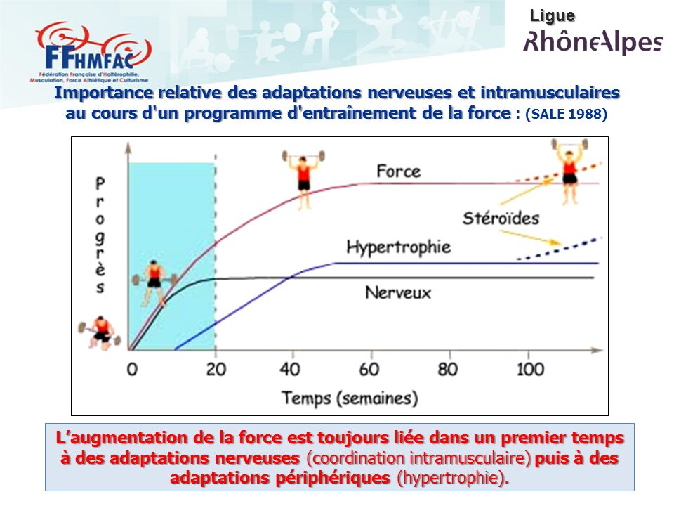 Laugmentation de la force est toujours liée dans un premier temps à des adaptations nerveuses (coordination intramusculaire) puis à des adaptations pé