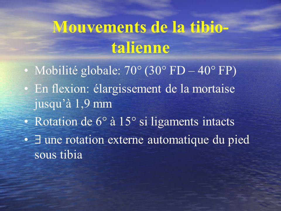 Mouvements de la tibio- talienne Mobilité globale: 70° (30° FD – 40° FP) En flexion: élargissement de la mortaise jusquà 1,9 mm Rotation de 6° à 15° s
