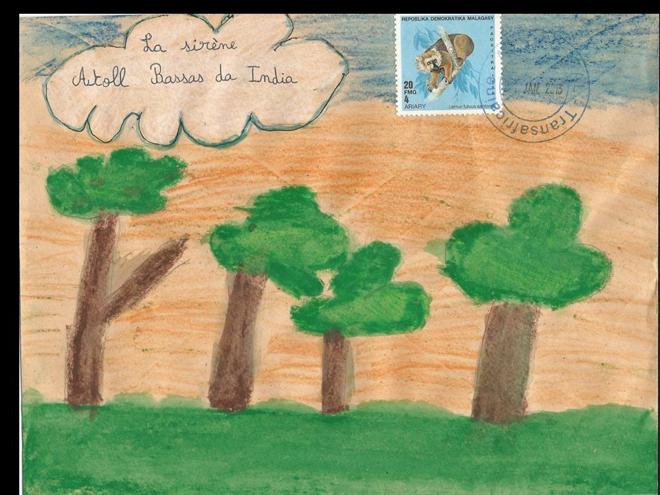 Chère Epave, Je suis une pipe sculptée dans un bois de palétuvier, cet arbre de la mangrove.