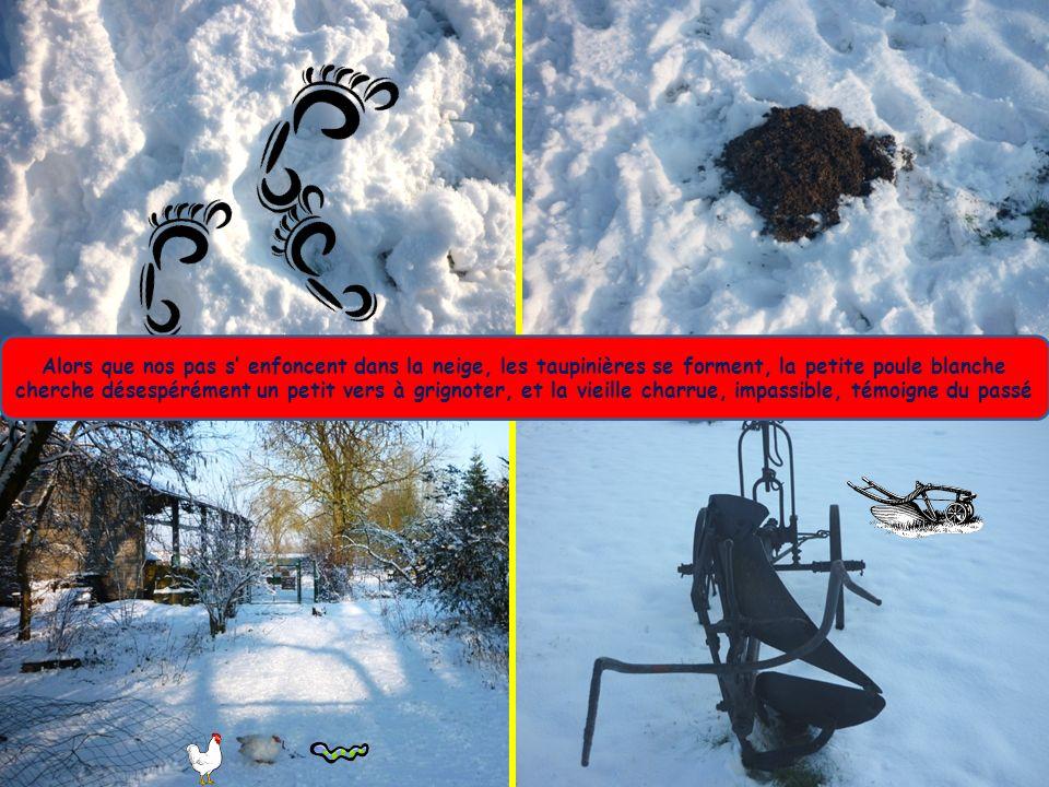 Alors que nos pas s enfoncent dans la neige, les taupinières se forment, la petite poule blanche cherche désespérément un petit vers à grignoter, et la vieille charrue, impassible, témoigne du passé