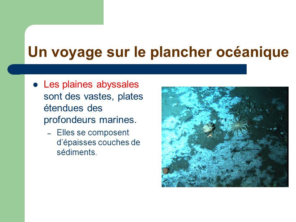Un voyage sur le plancher océanique Les plaines abyssales sont des vastes, plates étendues des profondeurs marines. – Elles se composent dépaisses cou
