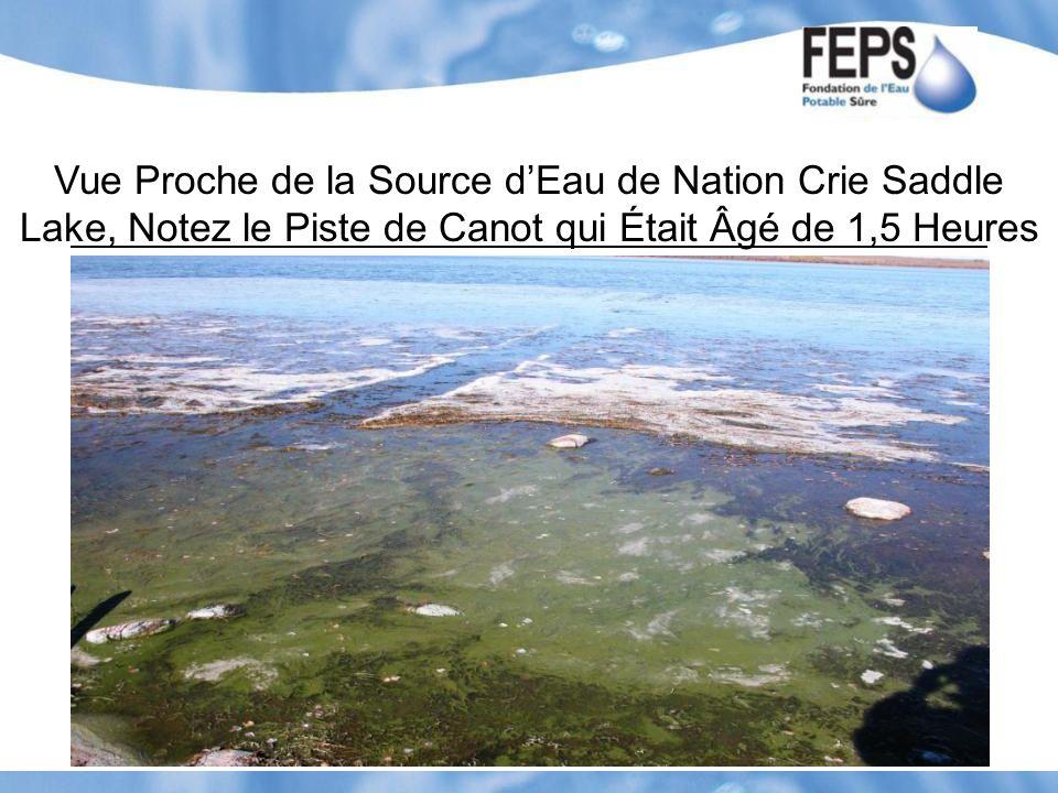 Vue Proche de la Source dEau de Nation Crie Saddle Lake, Notez le Piste de Canot qui Était Âgé de 1,5 Heures