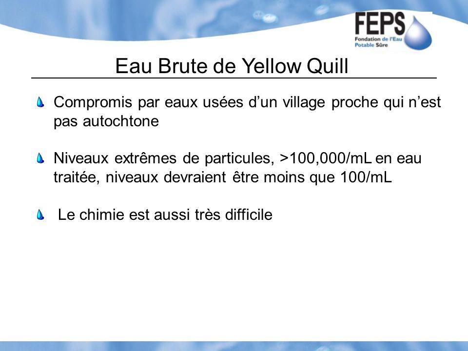 Eau Brute de Yellow Quill Compromis par eaux usées dun village proche qui nest pas autochtone Niveaux extrêmes de particules, >100,000/mL en eau trait
