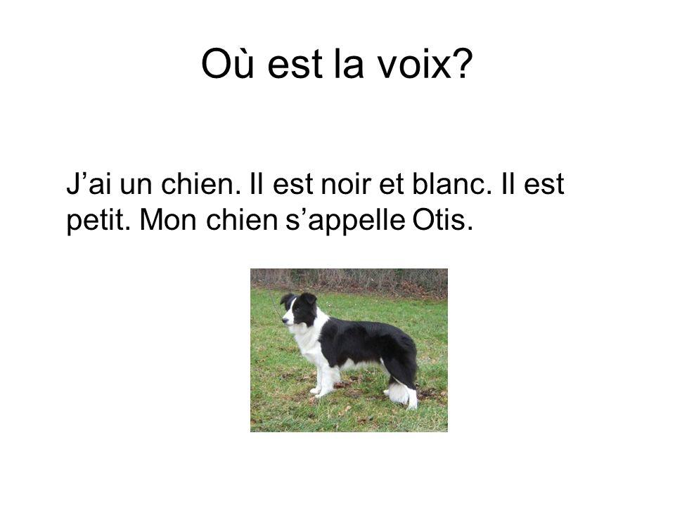 Où est la voix? Jai un chien. Il est noir et blanc. Il est petit. Mon chien sappelle Otis.