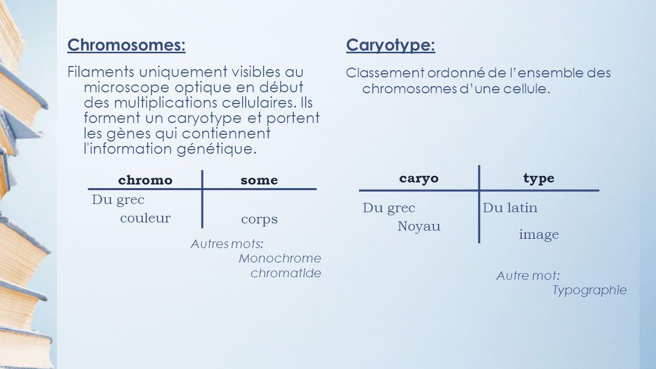 Chromosomes: Filaments uniquement visibles au microscope optique en début des multiplications cellulaires.