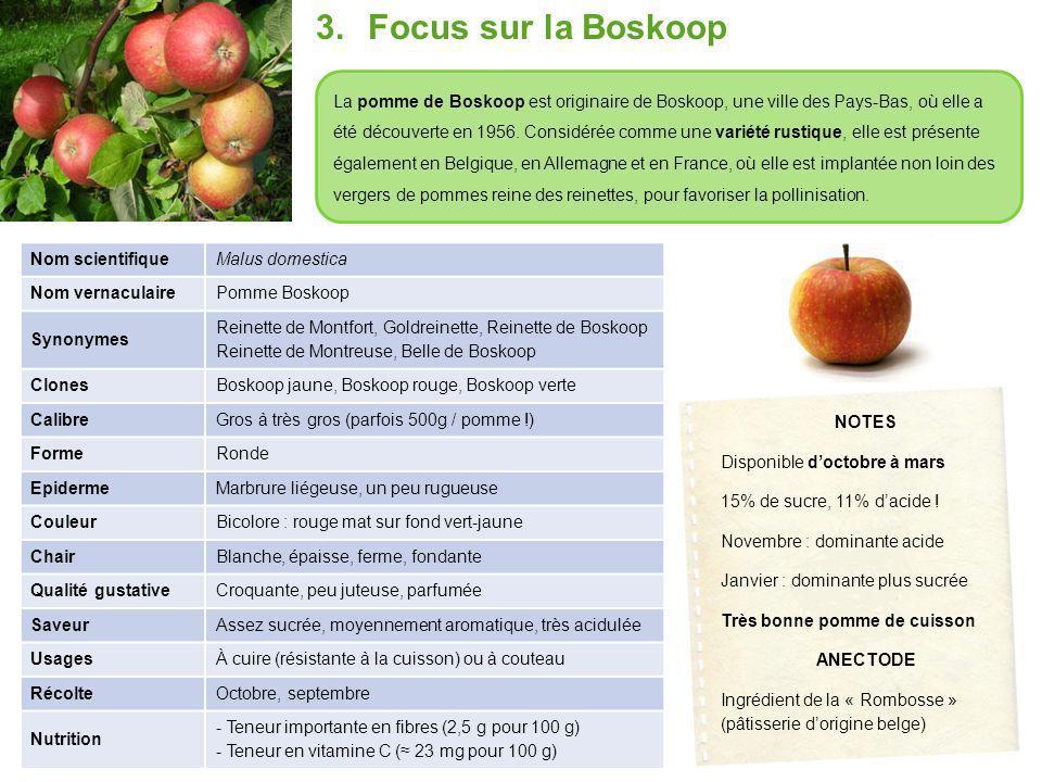 3.Focus sur la Boskoop La pomme de Boskoop est originaire de Boskoop, une ville des Pays-Bas, où elle a été découverte en 1956.