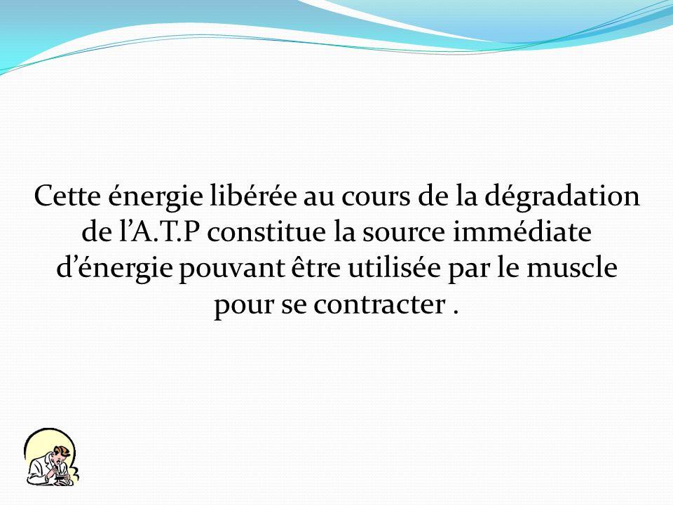 Cette énergie libérée au cours de la dégradation de lA.T.P constitue la source immédiate dénergie pouvant être utilisée par le muscle pour se contract
