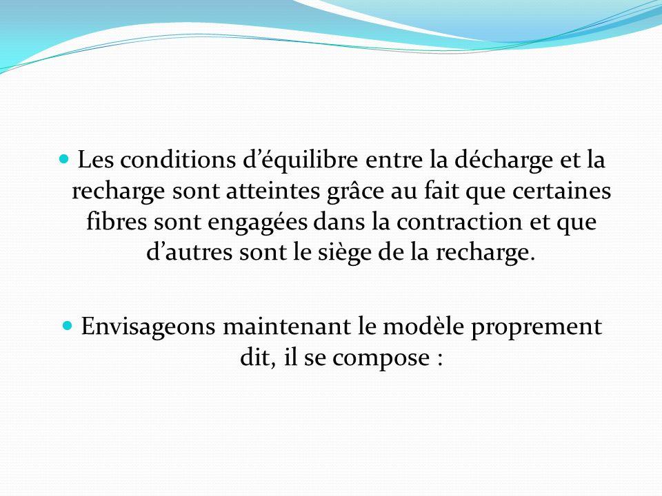Les conditions déquilibre entre la décharge et la recharge sont atteintes grâce au fait que certaines fibres sont engagées dans la contraction et que