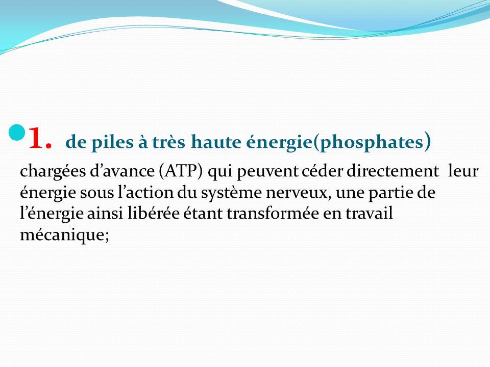 1. de piles à très haute énergie(phosphates ) chargées davance (ATP) qui peuvent céder directement leur énergie sous laction du système nerveux, une p