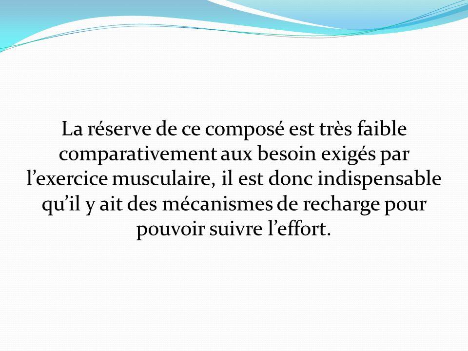 La réserve de ce composé est très faible comparativement aux besoin exigés par lexercice musculaire, il est donc indispensable quil y ait des mécanism