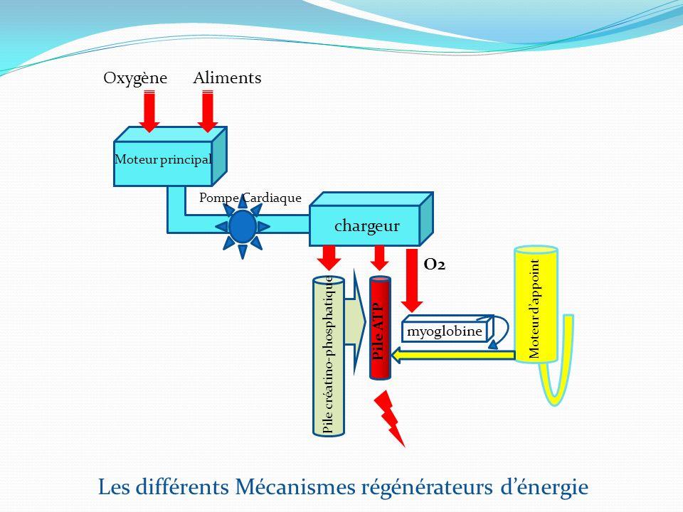 Moteur principal chargeur myoglobine Moteur dappoint Pile ATP Pile créatino-phosphatique O2 Pompe Cardiaque AlimentsOxygène Les différents Mécanismes