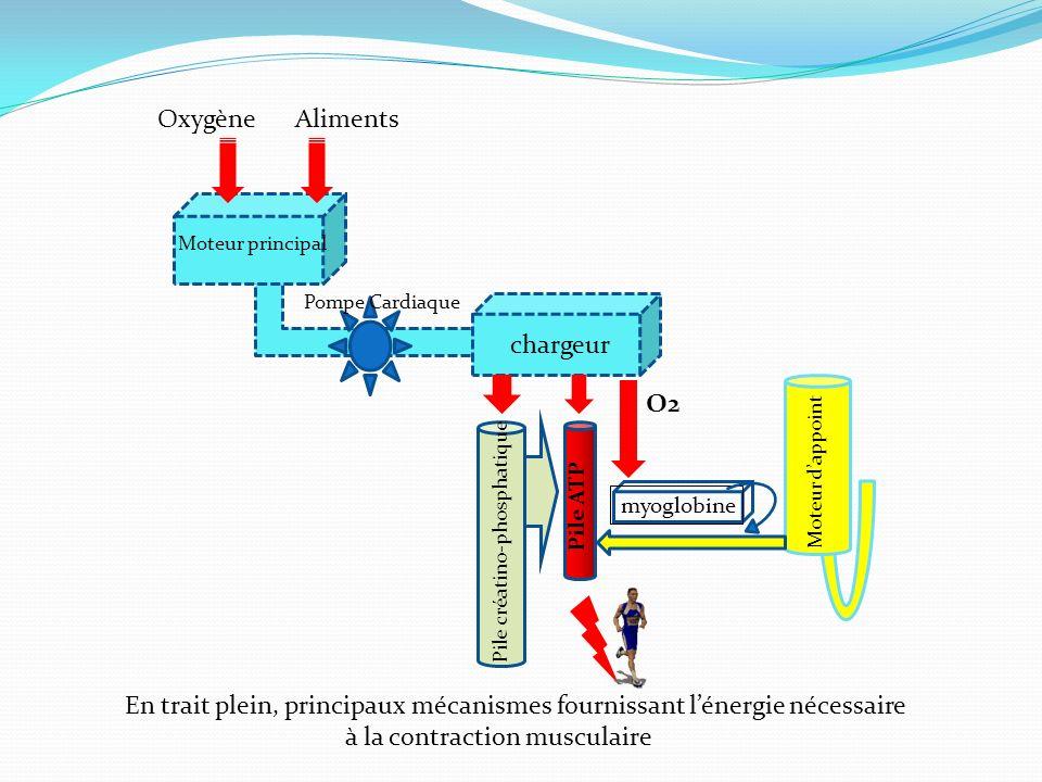 Moteur principal chargeur myoglobine Moteur dappoint Pile ATP Pile créatino-phosphatique O2 Pompe Cardiaque AlimentsOxygène En trait plein, principaux