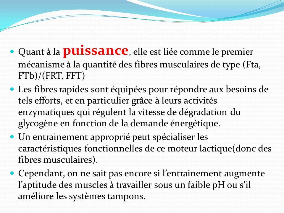 Quant à la puissance, elle est liée comme le premier mécanisme à la quantité des fibres musculaires de type (Fta, FTb)/(FRT, FFT) Les fibres rapides s