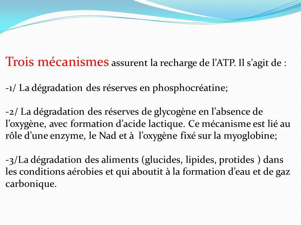 Trois mécanismes assurent la recharge de lATP. Il sagit de : -1/ La dégradation des réserves en phosphocréatine; -2/ La dégradation des réserves de gl