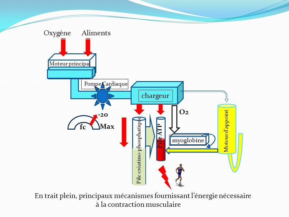 En trait plein, principaux mécanismes fournissant lénergie nécessaire à la contraction musculaire AlimentsOxygène Moteur principal chargeur myoglobine